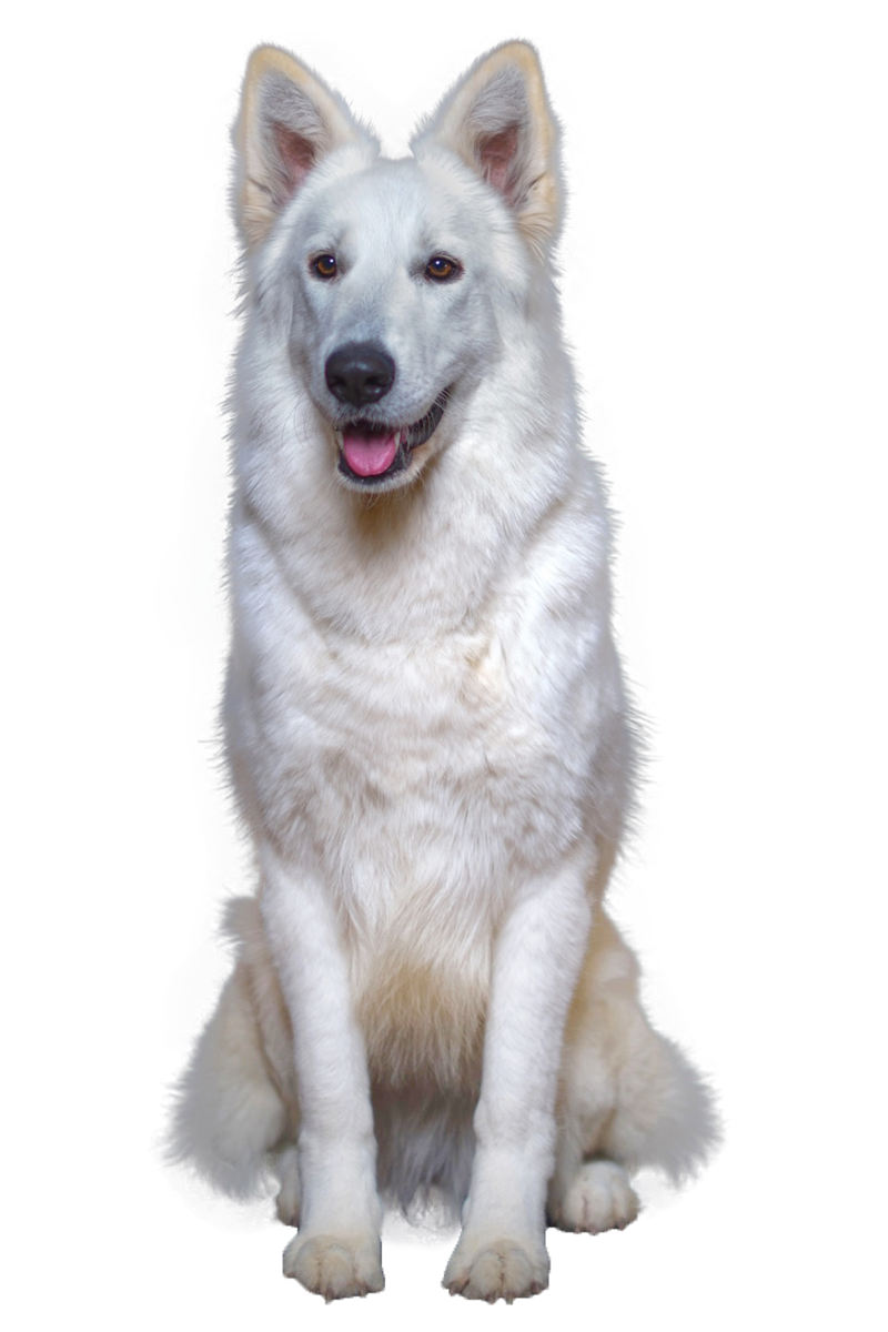 Welcome on Cataline Wolf Kennel website!